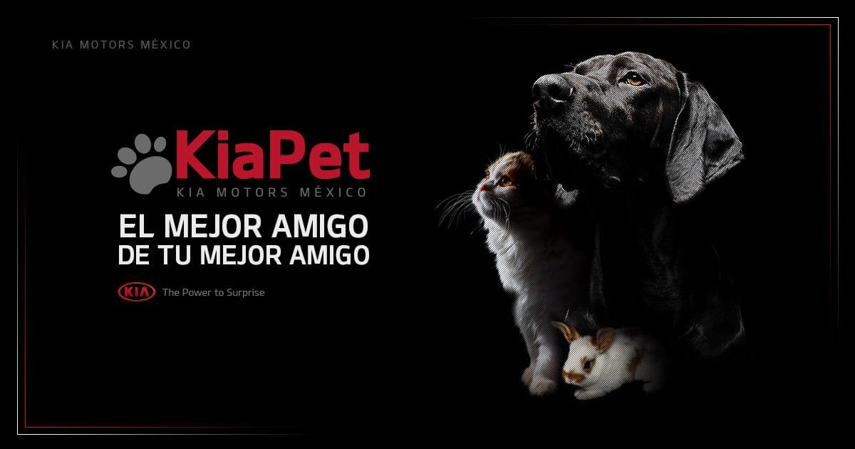Kia Pet: Un Espacio Dedicado A Quien Gusta Viajar Con Sus Mascotas
